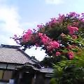 729_toukanjisarusuberiyane.jpg