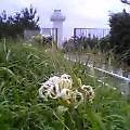 anori-toudai-hamayuu226.jpg