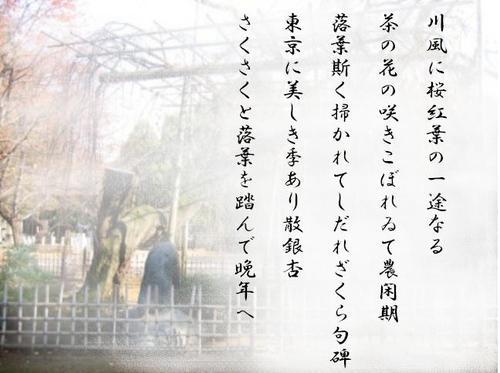 Sidarezakura