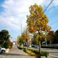 駅までの路の直線黄葉季