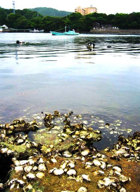 岸壁の牡蠣が吐きをる夏の潮