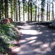 林中に永日の陽の零れけり