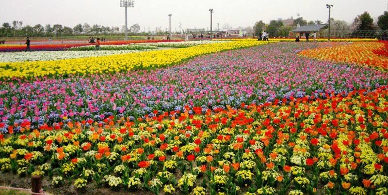 春の園会話弾めば歩の緩く