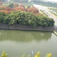 東京に美しき季あり散銀杏