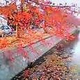 川風に桜紅葉の一途なる