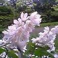 神垣の池畔幽める花卯木