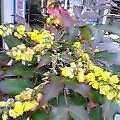 春昼の花舗にきて選るプレゼント