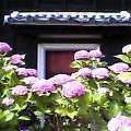 薄暗き老舗の屋ぬち夏暖簾