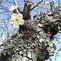 風止みて一木の梅匂ひ立つ