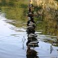 一列の端が乱れて春の鴨