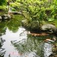 牡丹園池の辺に来て息を抜き