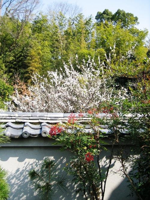 焼香のしんがりにつく梅の花