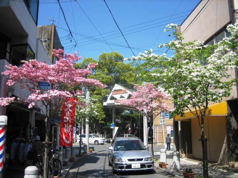 紅白に咲かせモールの花水木
