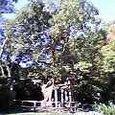 楠木の洞の冥みや神の留守