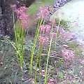 花褪せて茎のみどりや曼珠沙華