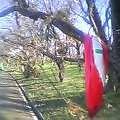 枝に残る赤き毛布や秋出水