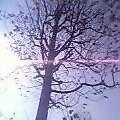 句座へ急ぐや鳥が舞ひ木の葉まひ