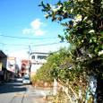 山茶花や旧き酒場の裏通り