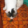 落蝉の止めを猫が刺しにけり