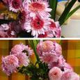 残菊に絶ゆることなき香りかな