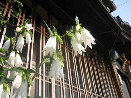 蛍袋咲いて古色の格子窓